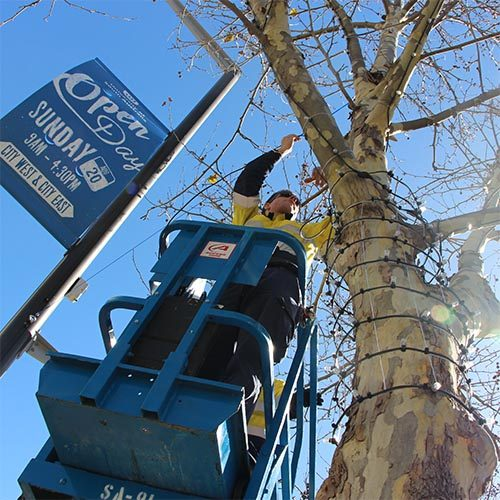 A worker on a lift installs bud lights on a North Terrace tree